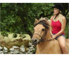 adopción gratis de pony fjord  de 7 años