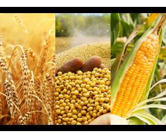 FOR SALE: Refined Sunflower Oil, Soybean Oil, Palm Oil, Rapeseed Oil, Corn Oil, Wheat